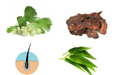 Các tinh chất có trong Bộ chăm sóc tóc Welhair