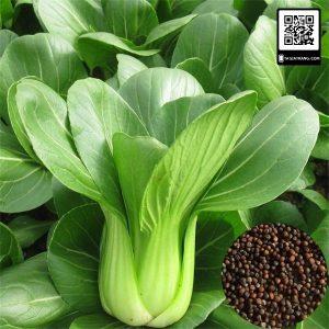 Cải chíp là loại rau giúp tăng cường chất xơ tốt cho sức khỏe và bổ sung canxi cho cơ thể