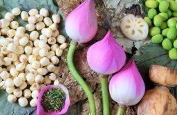 Cây sen – vị thuốc đa năng hiệu quả