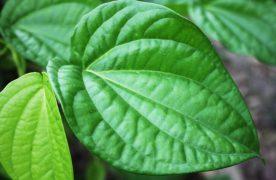 6 cách trị nám da mặt bằng thiên nhiên tại nhà